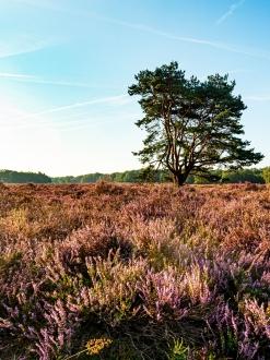 Blaricumse Heide 3348