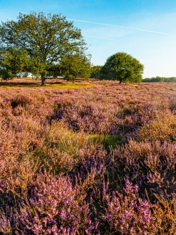 Blaricumse Heide 3371