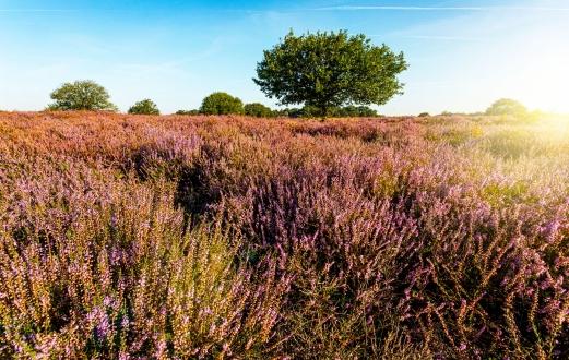 Blaricumse Heide 3379