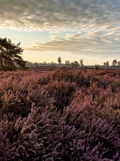Den Treek Henschoten Landschap 5661