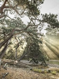 Forest of the Fallen Light – 2