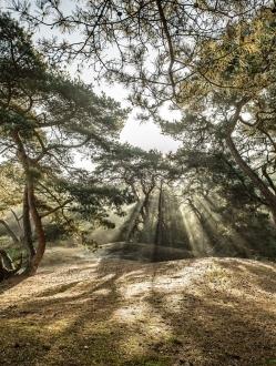 Forest of the Fallen Light – 1
