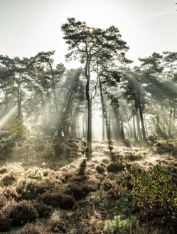 Forest of the Fallen Light – 3