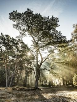 Forest of the Fallen Light – 4