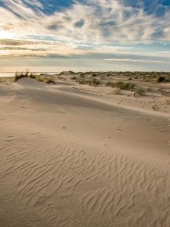 De Hors (Texel) 8994