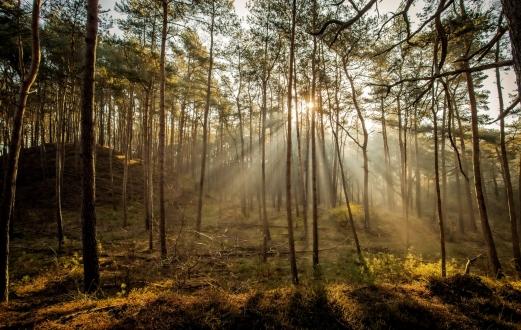 Hendriksbos Hoge Veluwe Landschap 0390