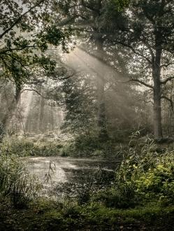 Forest of the Fallen Light – 5