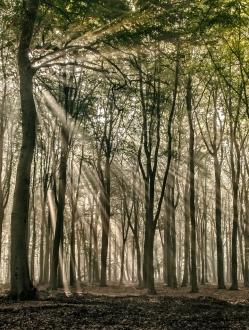 Forest of the Fallen Light – 7