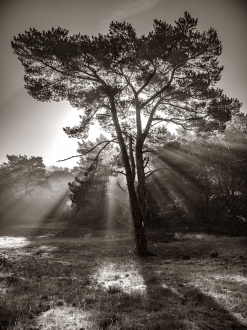 Forest of the Fallen Light – 3