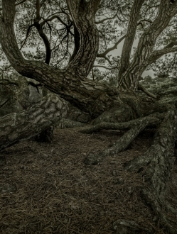 Mystic Forest – 1